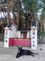 guardian dog.JPG