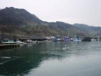 筒石漁港2012.4.JPG