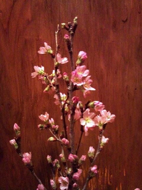 cherry blossm